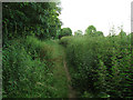 SJ7661 : Nettles alongside the Sandbach Bypass by Stephen Craven