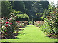 TQ8010 : Rose garden, Alexandra Park by Oast House Archive