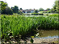 TF8037 : Looking over the village pond, Stanhoe, Norfolk by Richard Humphrey