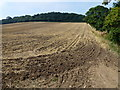 TF8141 : Cultivated stubble near Cobble Hill Plantation by Richard Humphrey