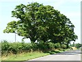 SK9709 : A bit of welcome shade west of Tickencote by Christine Johnstone