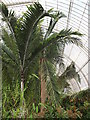 TQ1876 : Inside the Palm House by Colin Smith