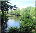 TQ2668 : River Wandle - Morden Hall Park by Paul Gillett