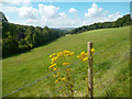 SU6281 : Hillside and Ragwort by Des Blenkinsopp