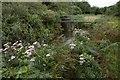 SW5533 : Footbridge across the Hayle River by Elizabeth Scott