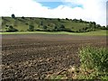 ST8952 : Field next to B3098, looking towards Westbury Hill by David Gearing