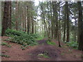 SK2263 : Limestone Way in Harthill Moor Wood by John Slater