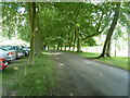 SO4565 : Avenue of trees by Croft Castle car park by Dave Spicer