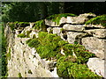 SP0705 : Dry Stone Wall, Barnsley Park by Nigel Mykura
