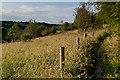TQ4061 : Saltbox Hill LNR by Ian Capper