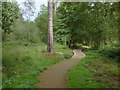 SU9068 : Englemere Pond nature reserve by Alan Hunt
