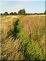 SP9437 : Drainage channel by a lost footpath by Philip Jeffrey
