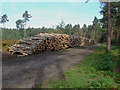 SU8966 : Log piles, Swinley Park by Alan Hunt