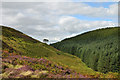 NY9149 : Slope descending to Beldon Cleugh by Trevor Littlewood