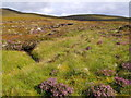 NH2528 : Allt Coire Beithe emerging from a peat blanket above Glen Affric by ian shiell