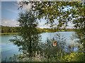 SJ6476 : Budworth Mere by David Dixon