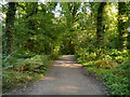 SJ6576 : Path in Marbury Country Park by David Dixon