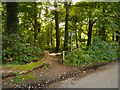 SJ6575 : Path into Hopyards Wood by David Dixon
