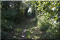 SW7753 : Bridleway becomes more shaded by Elizabeth Scott