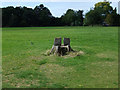 SJ8189 : Tree stump seat in Wythenshawe Park by John Rostron