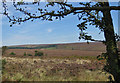 SE6991 : View to Spaunton Lodge by Pauline Eccles