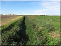 TL5489 : Ditch across Mare Fen by Hugh Venables