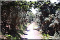 TM4668 : Footpath towards Westleton Walks  by Trevor Harris