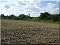 TL1663 : Farmland near Little Paxton Wood by JThomas