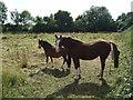 TL0863 : Horses, The Grange by JThomas