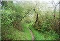 TQ0316 : Wey South Path by N Chadwick