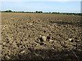 TL1159 : Farmland near Bushmead by JThomas