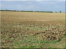 TL1459 : Farmland near Honeydon by JThomas