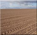 SK4988 : Ploughed field : Week 38