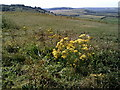 SP9515 : Pitstone Hill from Ivinghoe Beacon by Peter S