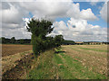 TL6352 : Fields, footpath and woods by John Sutton
