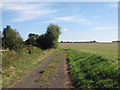 TL6252 : Byway to Carlton and Willingham Green by John Sutton