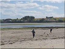 S8005 : Dog walking at Fethard Bay by Oliver Dixon