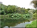S7218 : The Lake, JF Kennedy Memorial Arboretum by Oliver Dixon