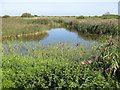 TF7543 : View from the Fen Hide, Titchwell reserve by Pauline Eccles
