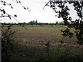 TL4361 : NIAB site, edge of Cambridge by Hugh Venables