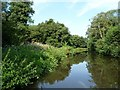 SO8380 : Lush towpath vegetation on the Staffs and Worcs by Christine Johnstone