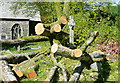 SX6359 : Harford churchyard, storm damage (2) by Graham Horn