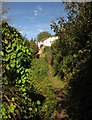 SX9065 : Footpath to Audley Avenue, Torquay by Derek Harper
