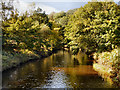 SJ9091 : Reddish Vale Country Park (Tiviot Dale), River Tame by David Dixon