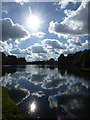 ST7734 : Stourhead: view across the lake into the sun by Chris Downer