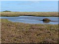 TF5657 : Pond on the saltmarsh at Gibraltar Point by Oliver Dixon