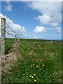 HY4728 : Fenceline, Egilsay, Orkney by Claire Pegrum