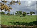 SJ6153 : Pasture near Burland, Cheshire by Roger  Kidd