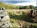 SE6998 : Rough pasture below Middle Ridge, Rosedale by Christine Johnstone