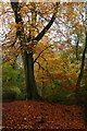 SK3085 : Autumn in Whiteley Woods by Graham Hogg